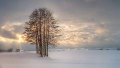 Baumgruppe im Sonnenaufgang
