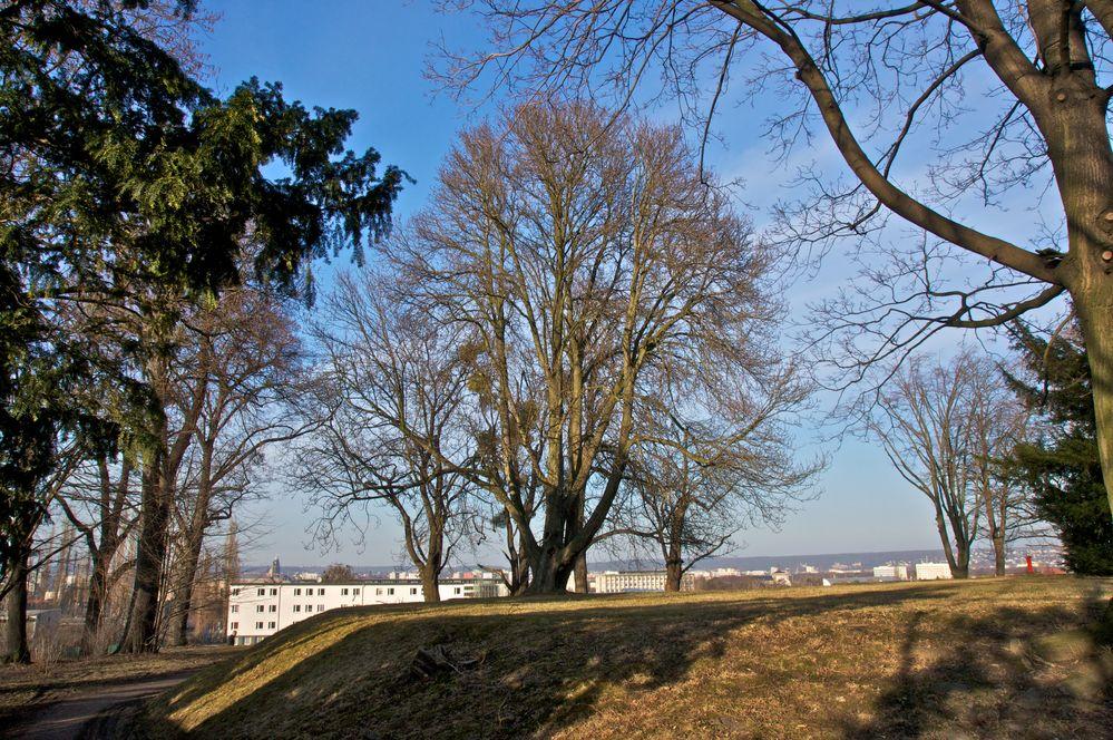 Baumgruppe im Volkspark (1)