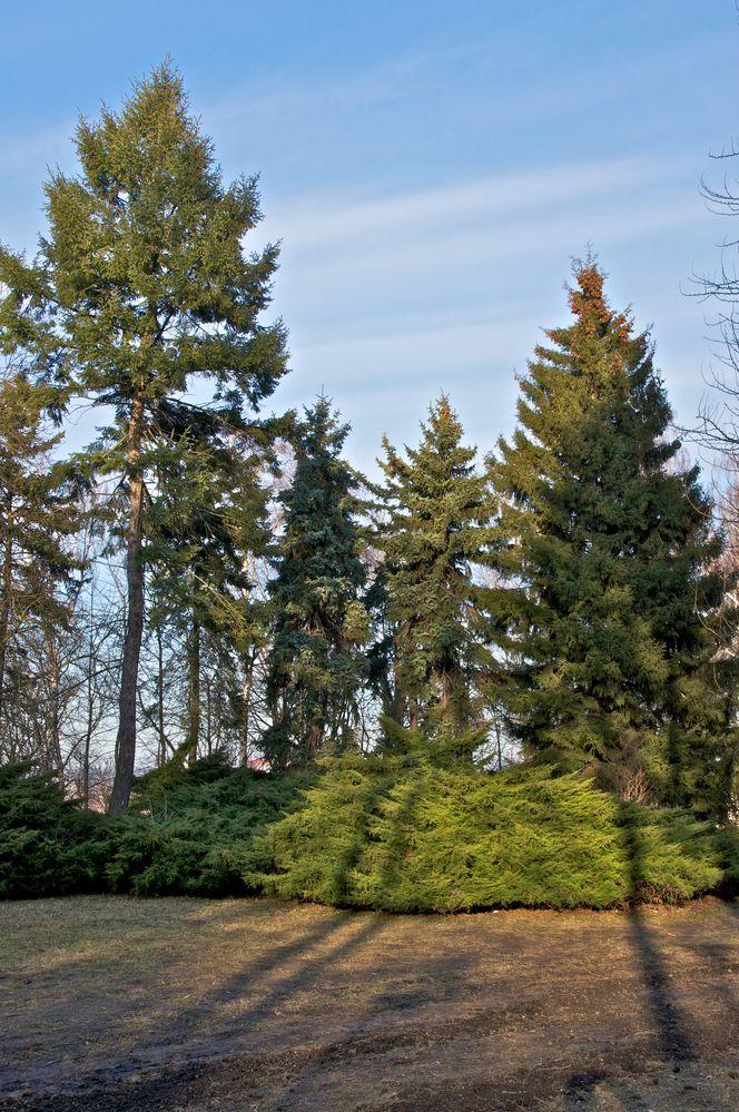 Baumgruppe im Volkspark (5)