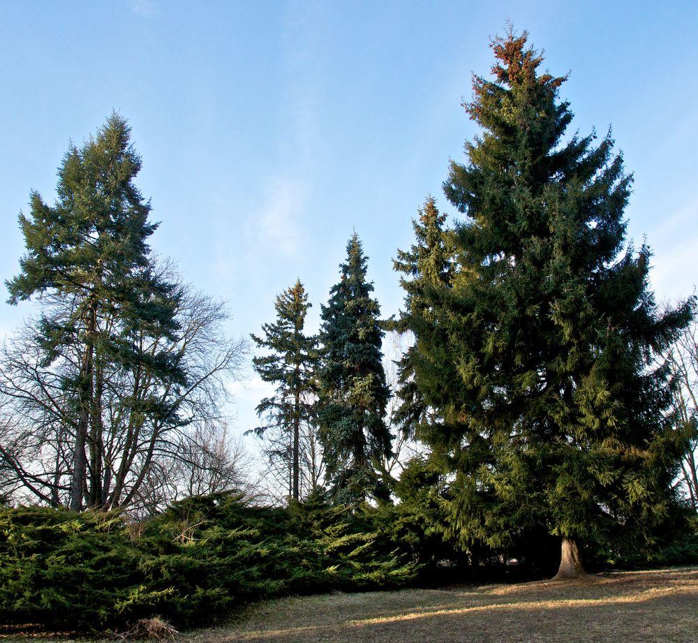 Baumgruppe im Volkspark (6)