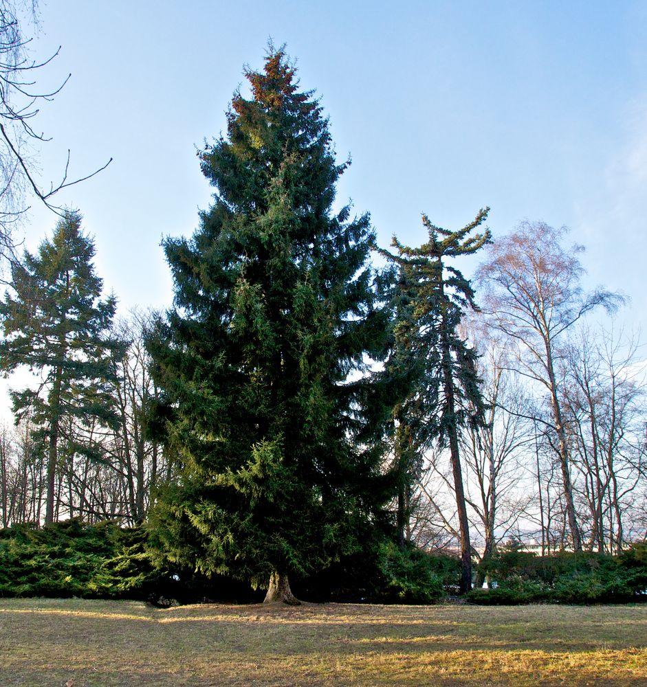 Baumgruppe im Volkspark (7)