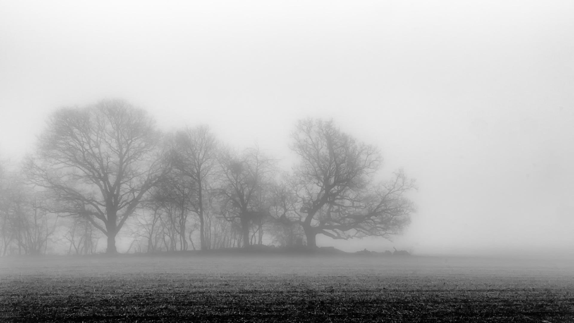 Baumgruppe im Winternebel