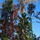 Baumgruppe mit Gräsern im Herbst!
