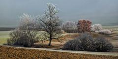 Baumgruppen im Wintersonnenlicht!