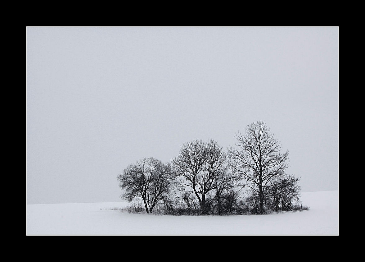 Bauminsel