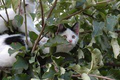Baumkatzen oder Katzenbaum