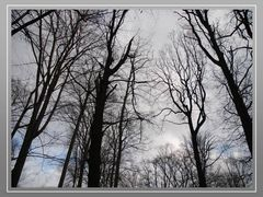 Baumkronen im Königsdorfer Wald