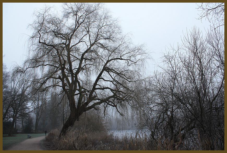 Baumlandschaft am Kupferteich