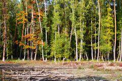 Baumlandschaften... # 0173 Kopie