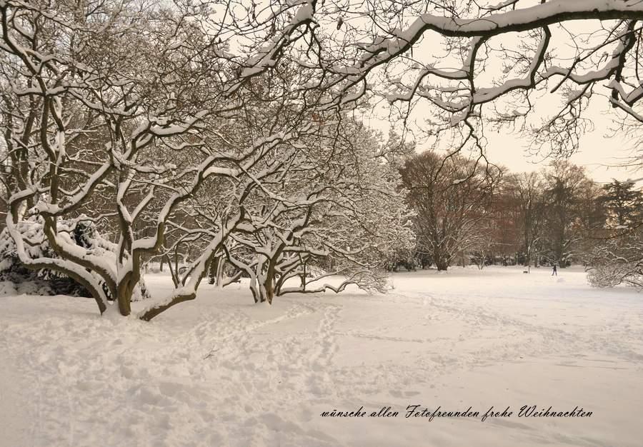 Baumlandschaften im Südpark in Düsseldorf Foto & Bild | gratulation ...