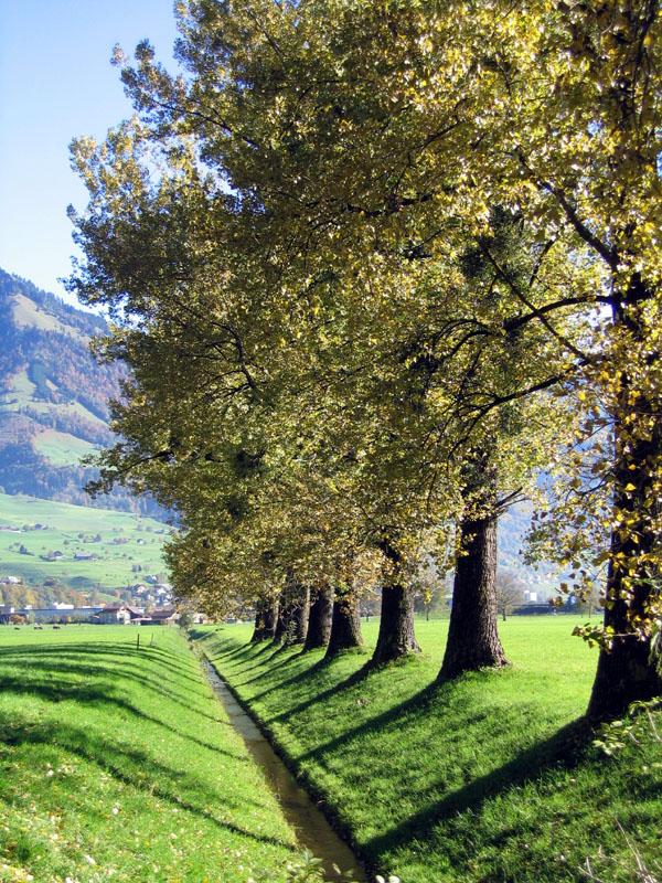 Baumreihe am Bächlein