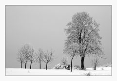 Baumreihe auf der schwäbischen Alb