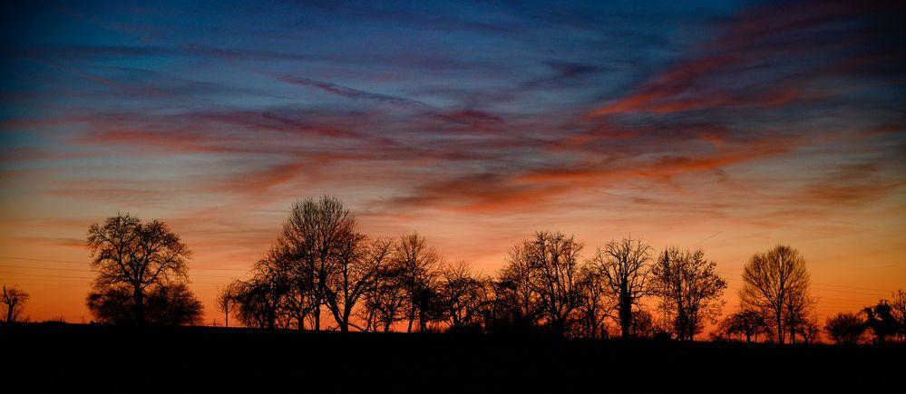Baumreihe im Gegenlicht nach Sonnenuntergang