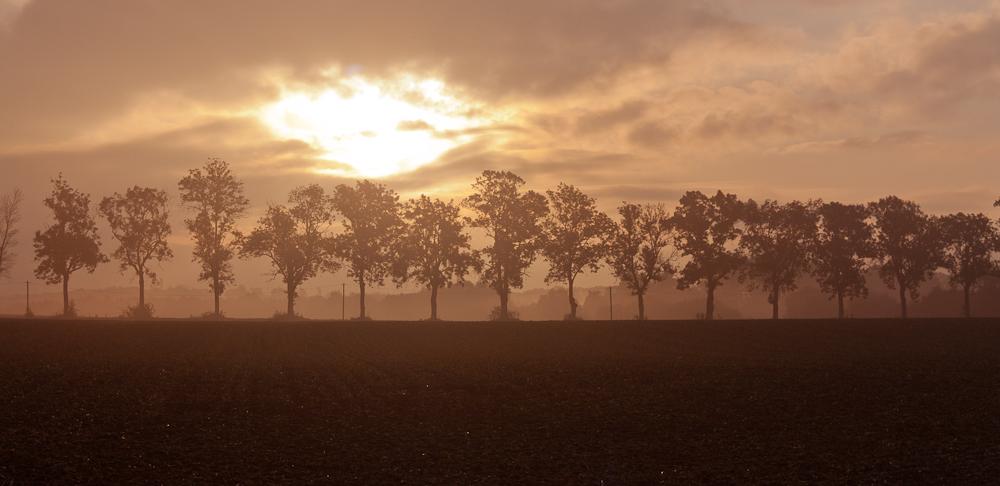 Baumreihe im Licht