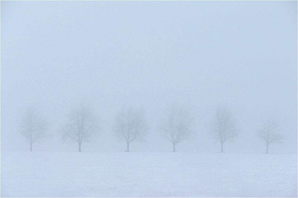Baumreihe im Winternebel