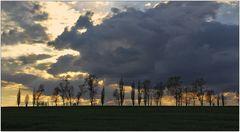 Baumreihe vor Sonnenuntergang
