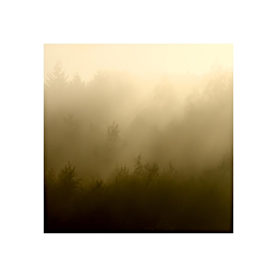 Baumreihen im Nebel