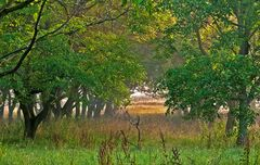 Baumreihen in der Morgensonne