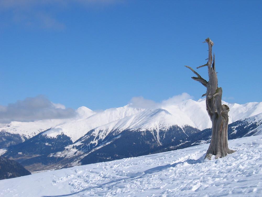 Baumreste im Schnee