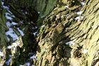Baumrinde im Winter