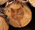 Baumscheiben - extremes Innenleben