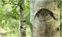 Baum.Seelen.Blick