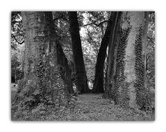 Baumserie 5 Eingang in die Baumwelt