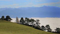 Baumsilhouetten über dem Nebelmeer ...