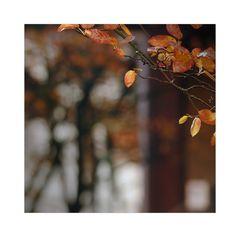 Baumspiegel ....