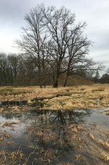 Baumspiegel - Spiegelbaum