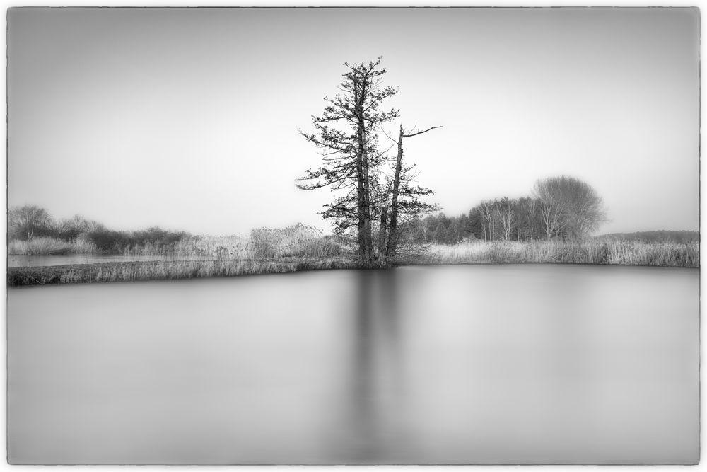 Baum:Spiegelung