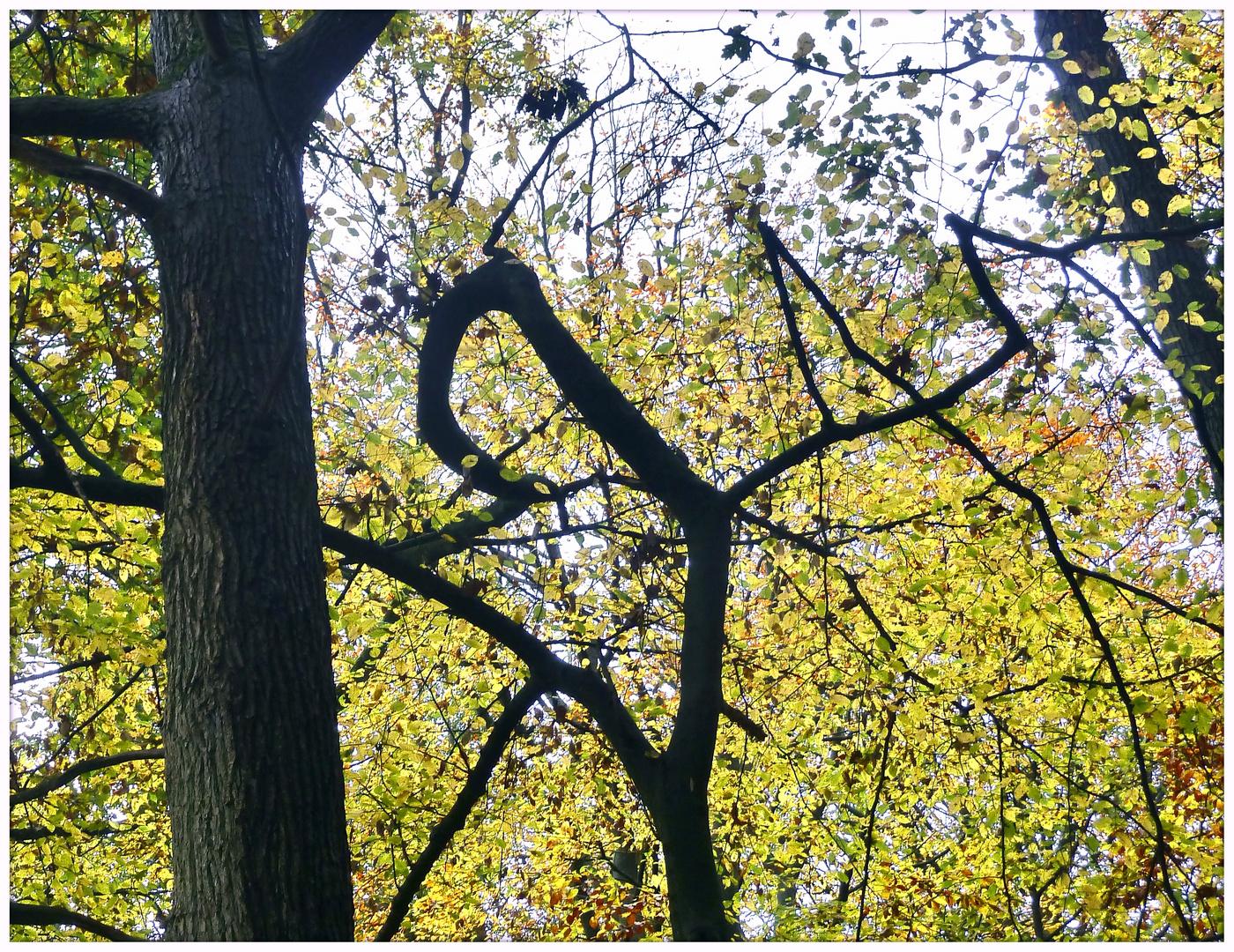 Baumspiel im Herbst
