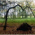 Baumspiele im Herbst