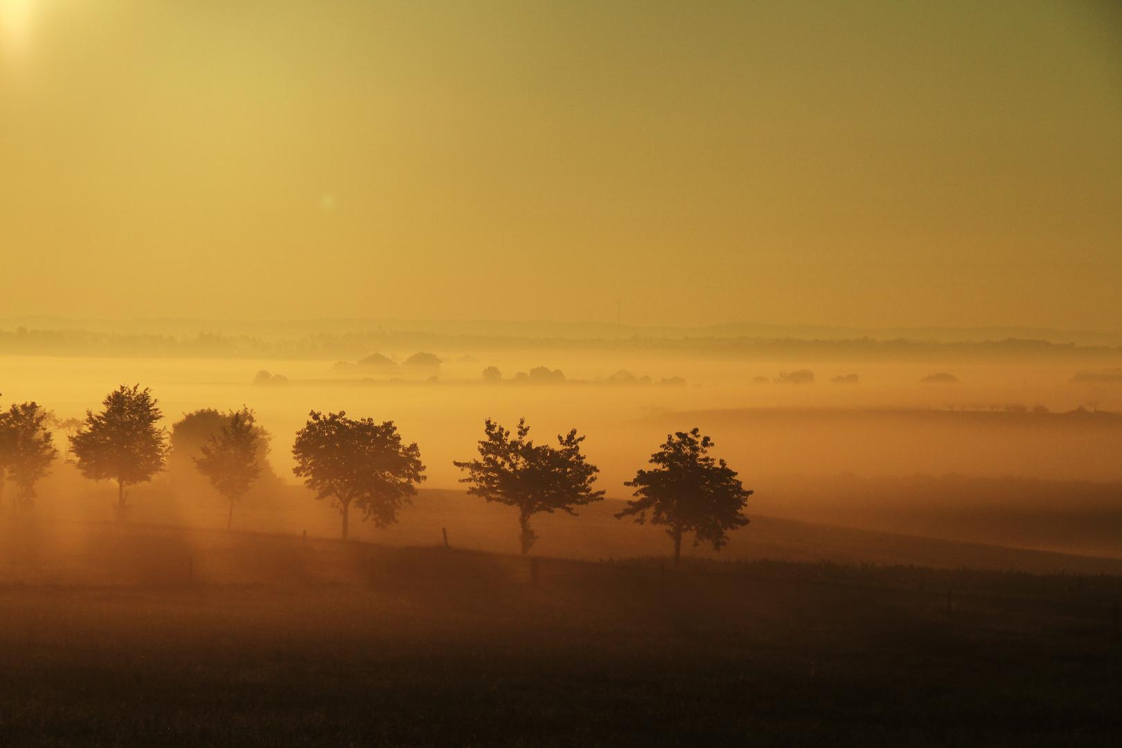 Baumspitzen im Nebel