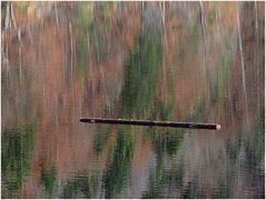 Baumstamm, durch den Herbst schwebend