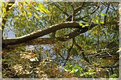 Baumstamm im Wasser
