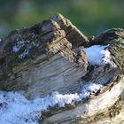 Baumstamm mit Schnee