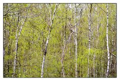 Baumstationen # 7453