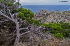 Baumstrukturen an der Punta de Capdepera