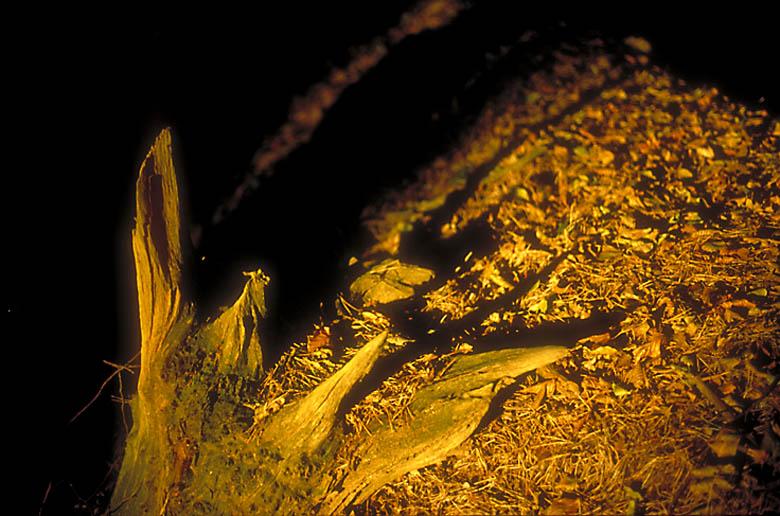 Baumstumpf im Abendlicht