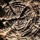 Baumstumpf im See konserviert