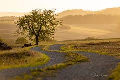 Baum:Weg