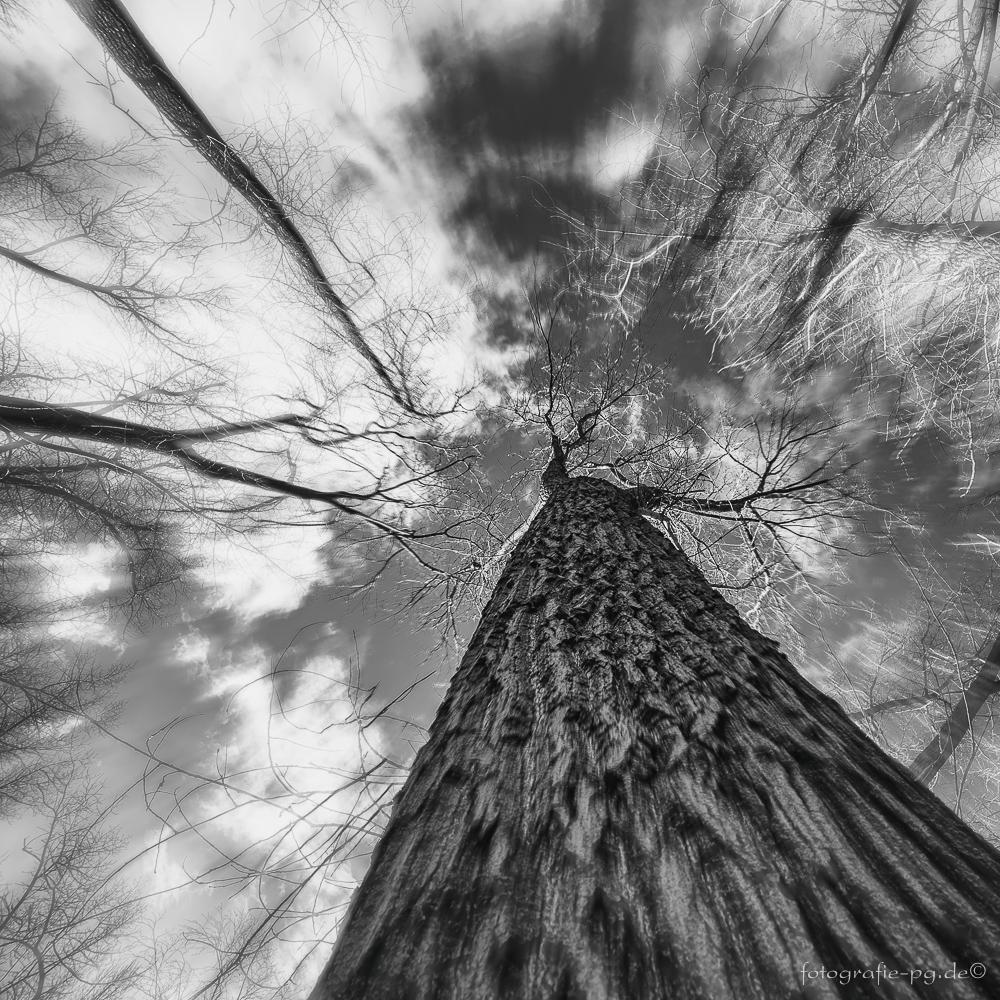 ... Baumwelten I ...