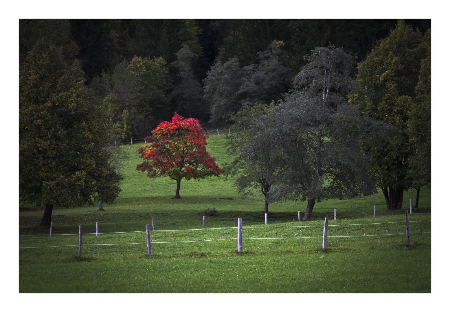 Bavarian Summer