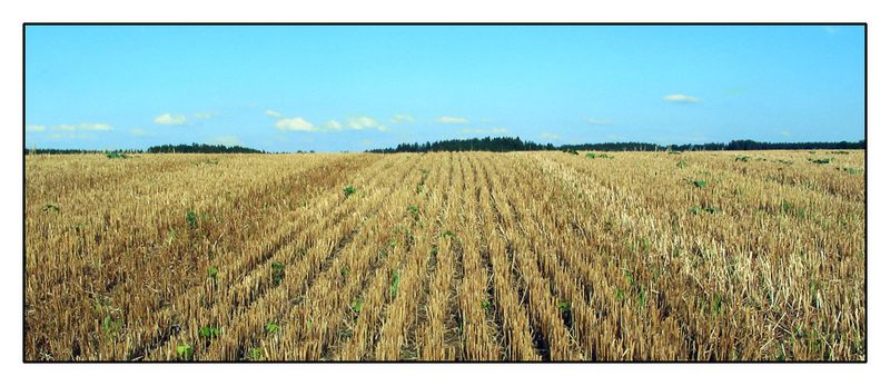 Bayrische Felder