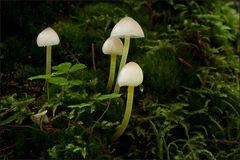 Bayrische Pilze