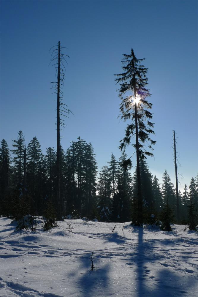 Bayrischer Wald im Winter 2008