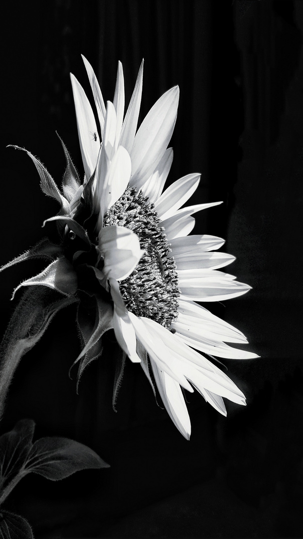 Be like a flower, and turn your face towards the sun.