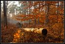Wald-Chaos von H. Howe