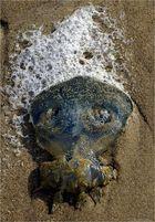 Beach Alien
